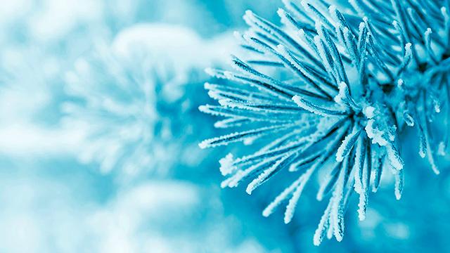 Zweige im Winter
