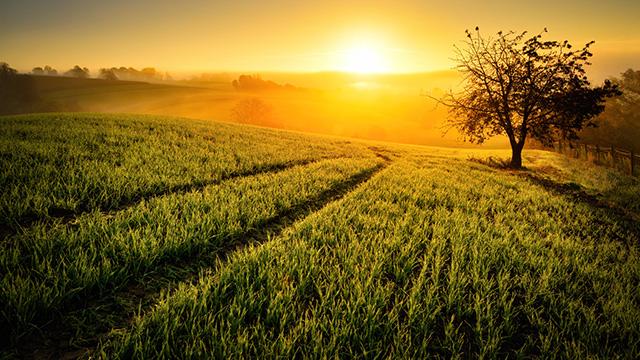 Die Sonne geht am Horizont unter | (c) unbekannt