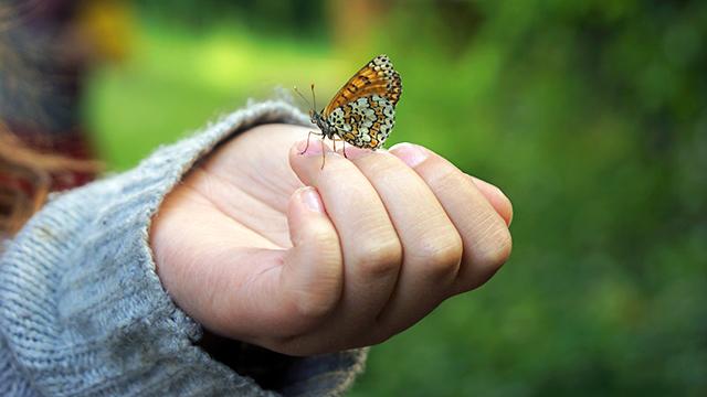 Natürliche Schönheit: Schmetterling