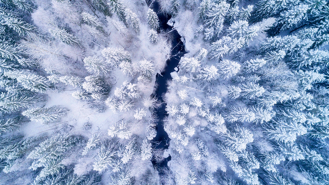 Gewässer als natürliche Grenze in einer winterlichen Waldlandschaft