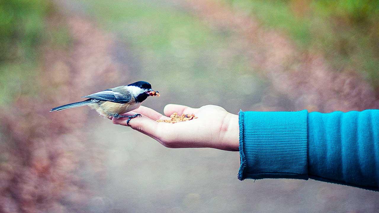 Ausgestreckter Arm mit Vogel als Sinnbild für Fürsorge
