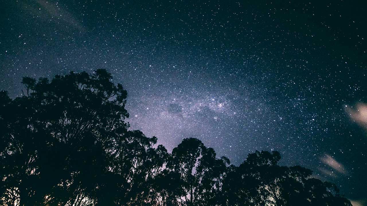 So nah und so fern: Silhouette von Bäumen und Sternenhimmel in Brisbane, Australien