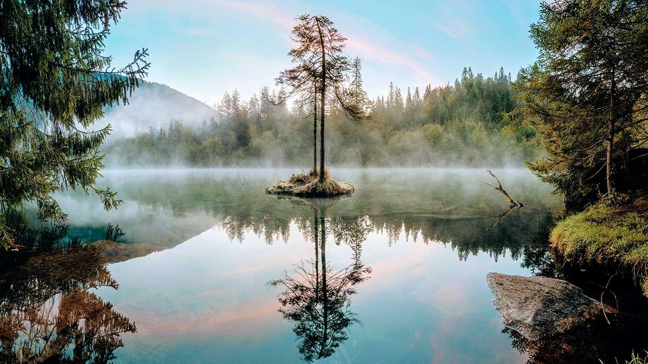 Baum in einem Waldsee