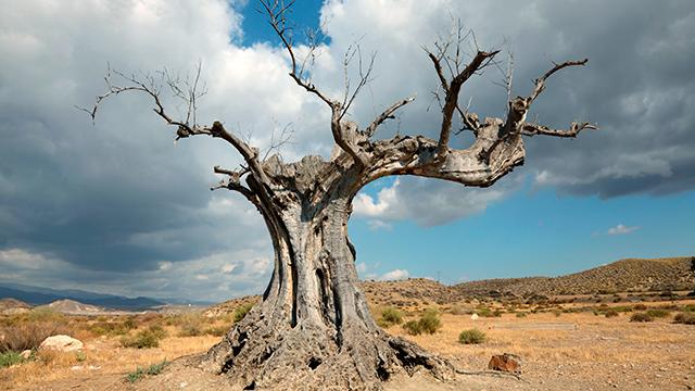 Toter Baum in der Wüste
