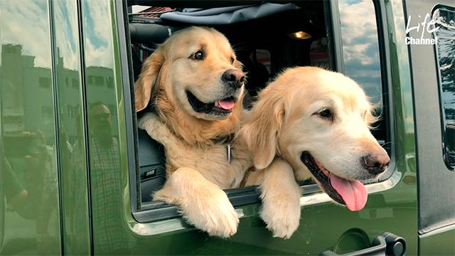 Therapiehunde Benaiah und Micah