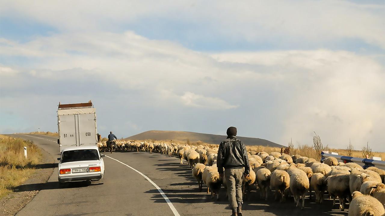 Mann unterwegs mit Schafen in Bergkarabach | (c) unsplash