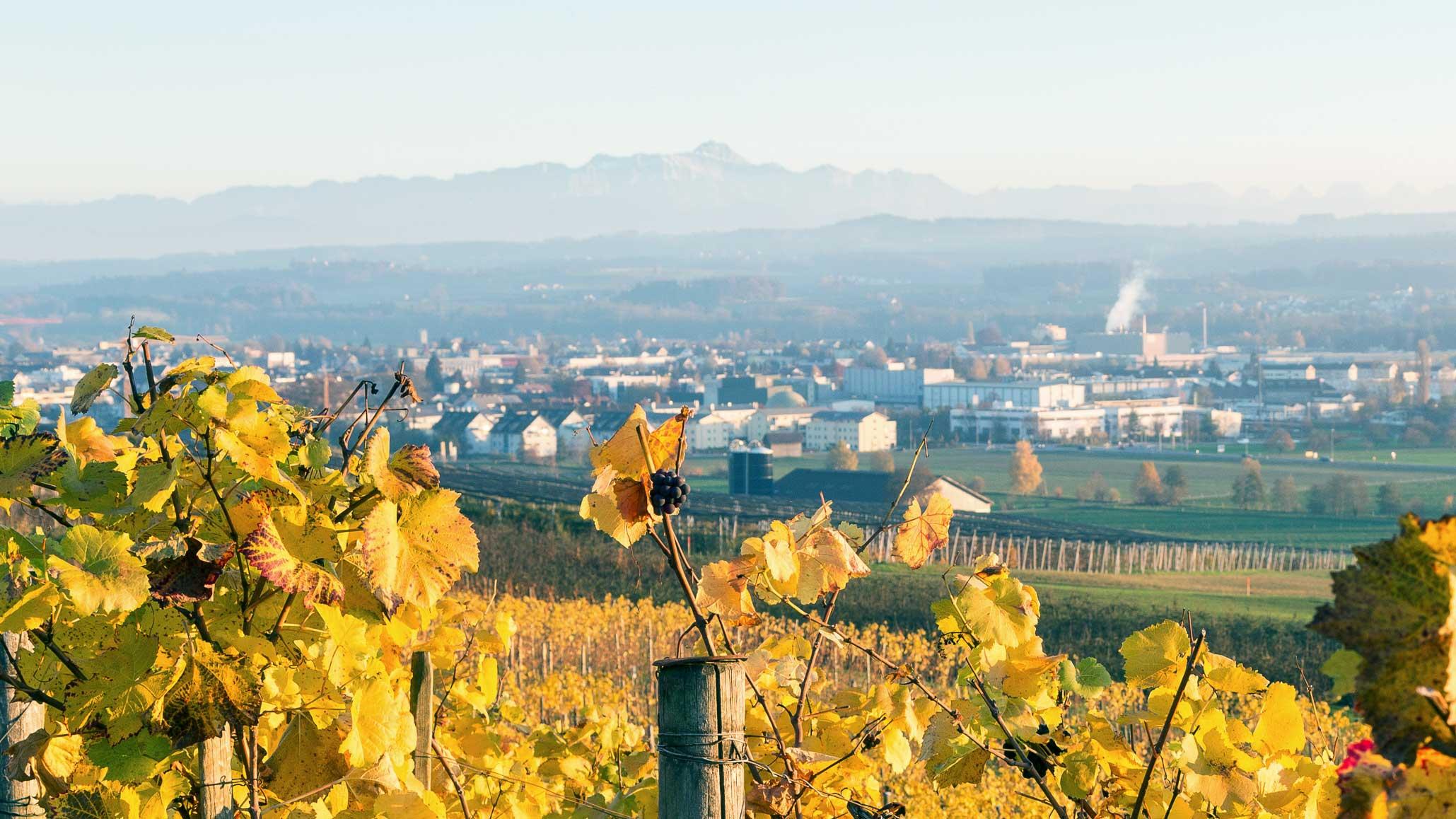 Blick vom Ottenberg auf Weinfelden