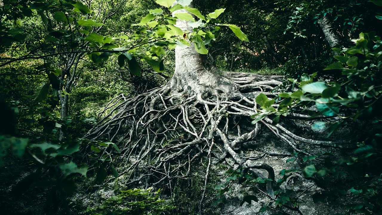 Wurzeln eines Baums in Borre, Dänemark | (c) Jacob Buchhave/Unsplash