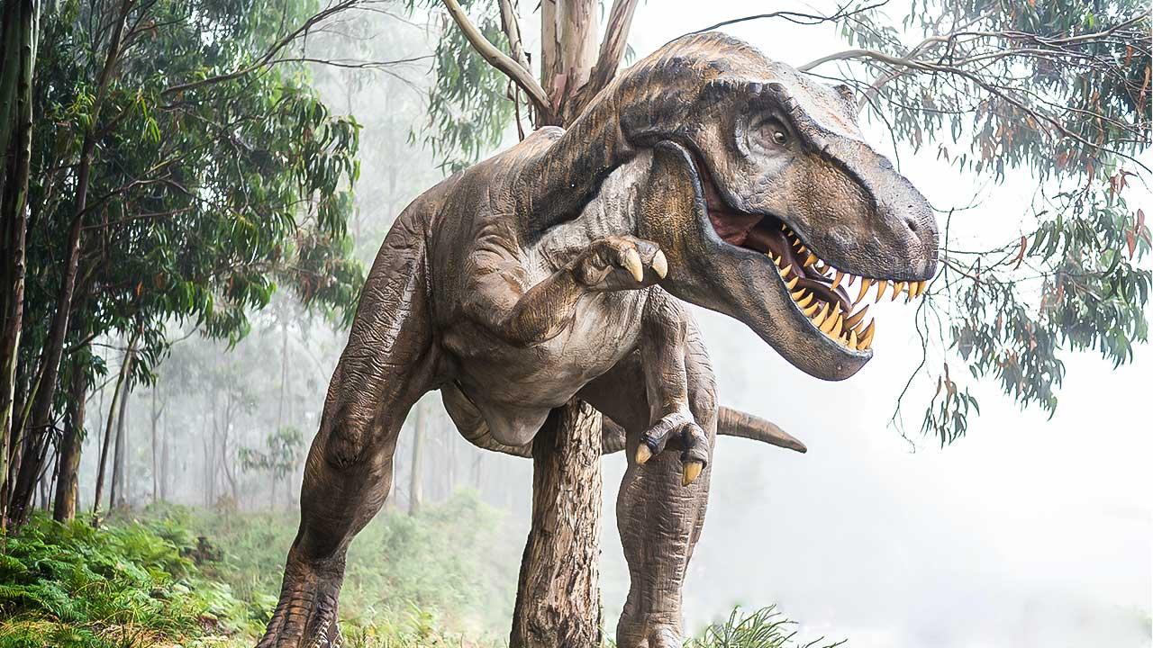 Tyrannosaurus in einem Museum