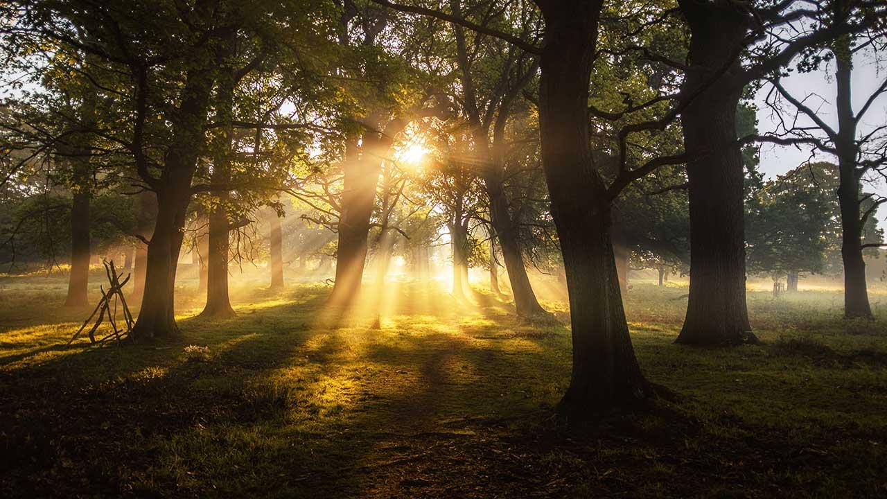 Sonnenlicht im Wald an einem Sommermorgen im Richmond Park in London