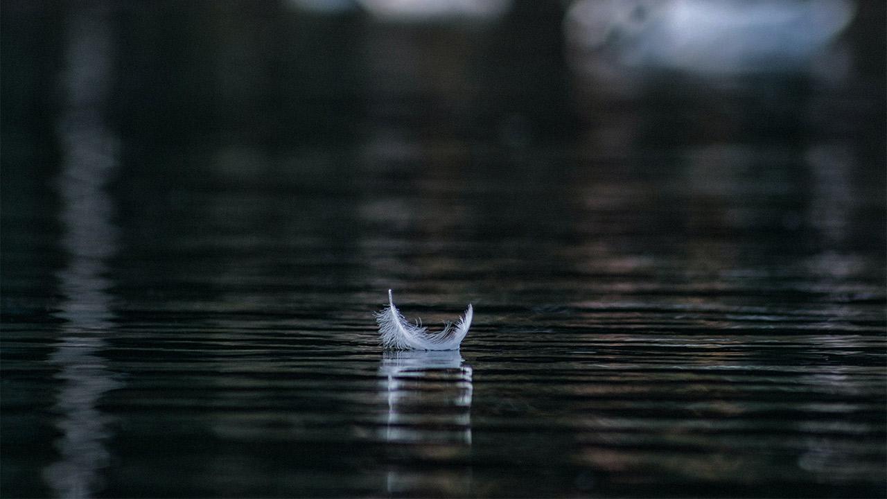 Eine Feder schwimmt auf dem Wasser.