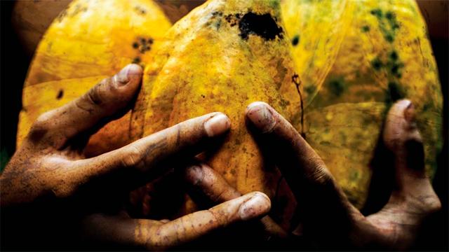 Ausschnitt Filmplakat «Chocolate de Paz»