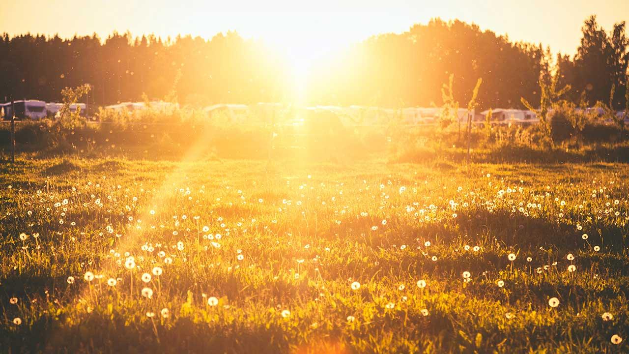 Sommerliche Wiese in Finnland mit goldenem Sonnenlicht