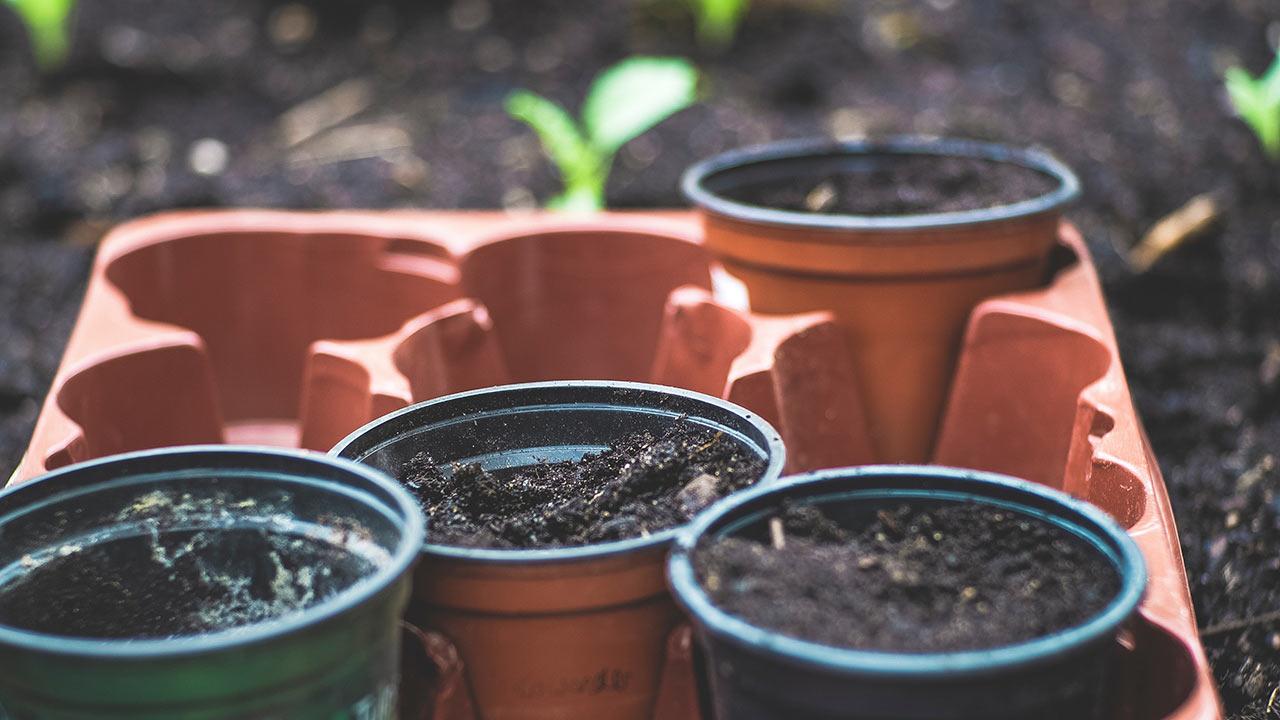 Die Setzlinge warten im Garten | (c) unsplash