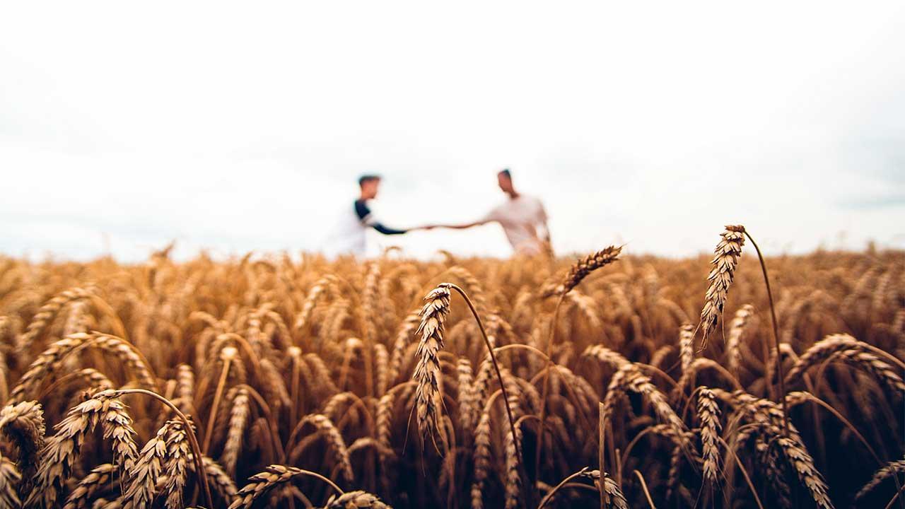 Getreifeld, im HIntergrund zwei Männer, die sich die Hände reichen