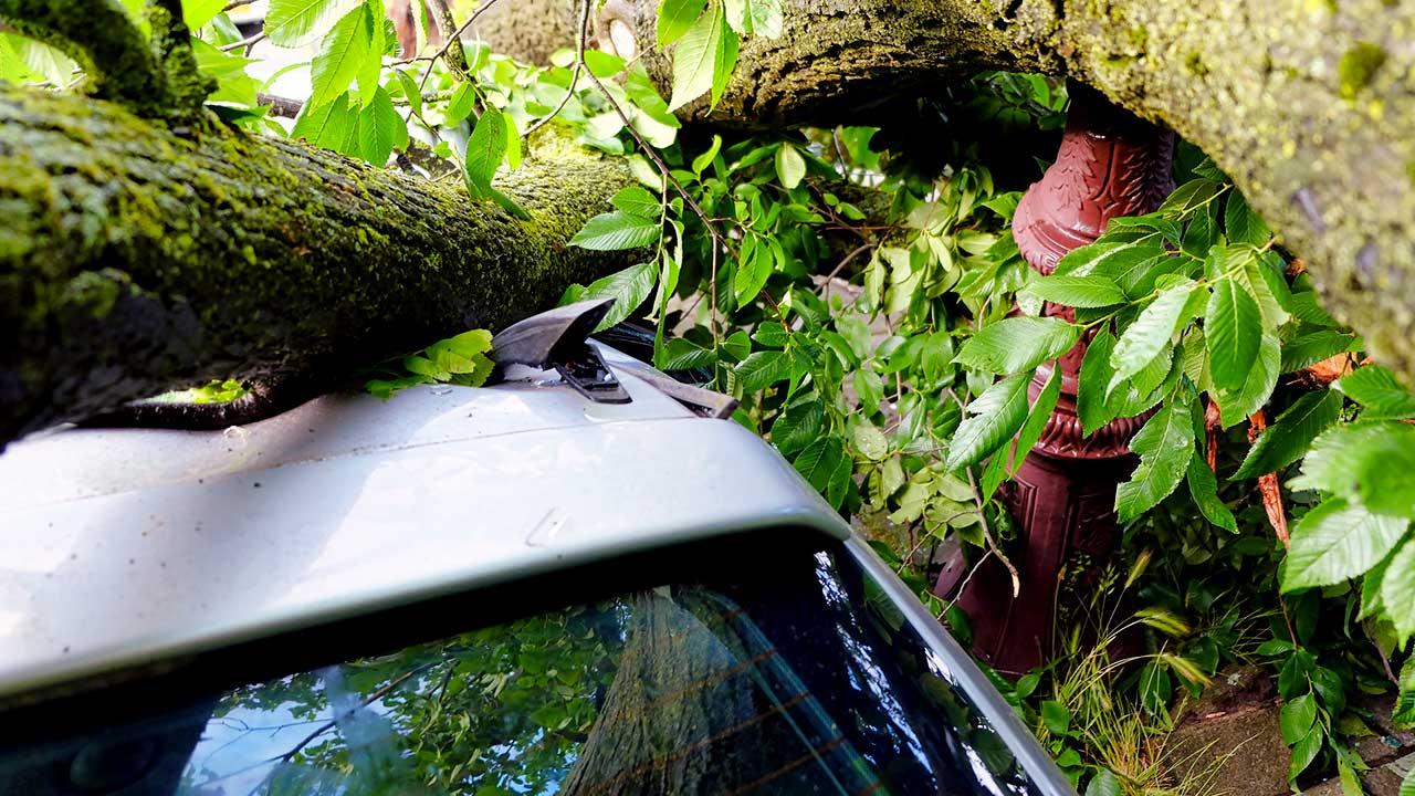Baum über einem Auto nach einem Sturm