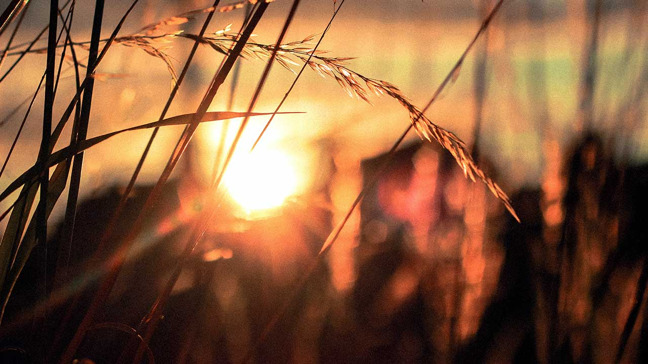 Sonnenuntergang hinter Gräsern
