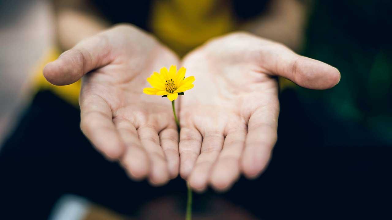 Ein Händepaar hält eine gelbe Blume und bietet sie an