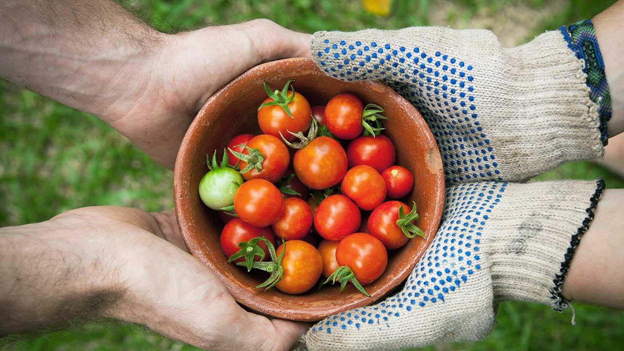 Cherry-Tomätchen zum Verschenken | (c) Elaine Casap/Unsplash