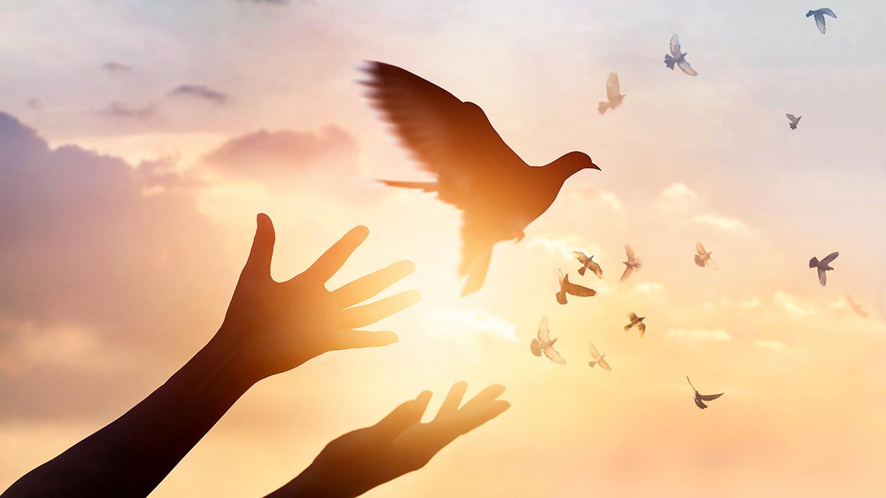 Taube als Symbol des Friedens