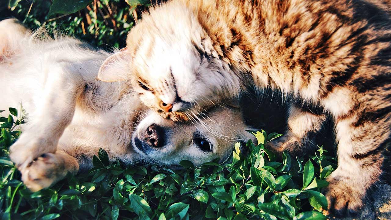 Hund und Katze spielen miteinander
