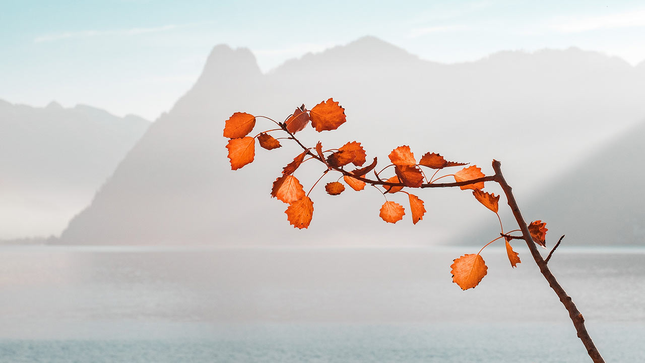 Herbstlaune farbig | (c) unsplash