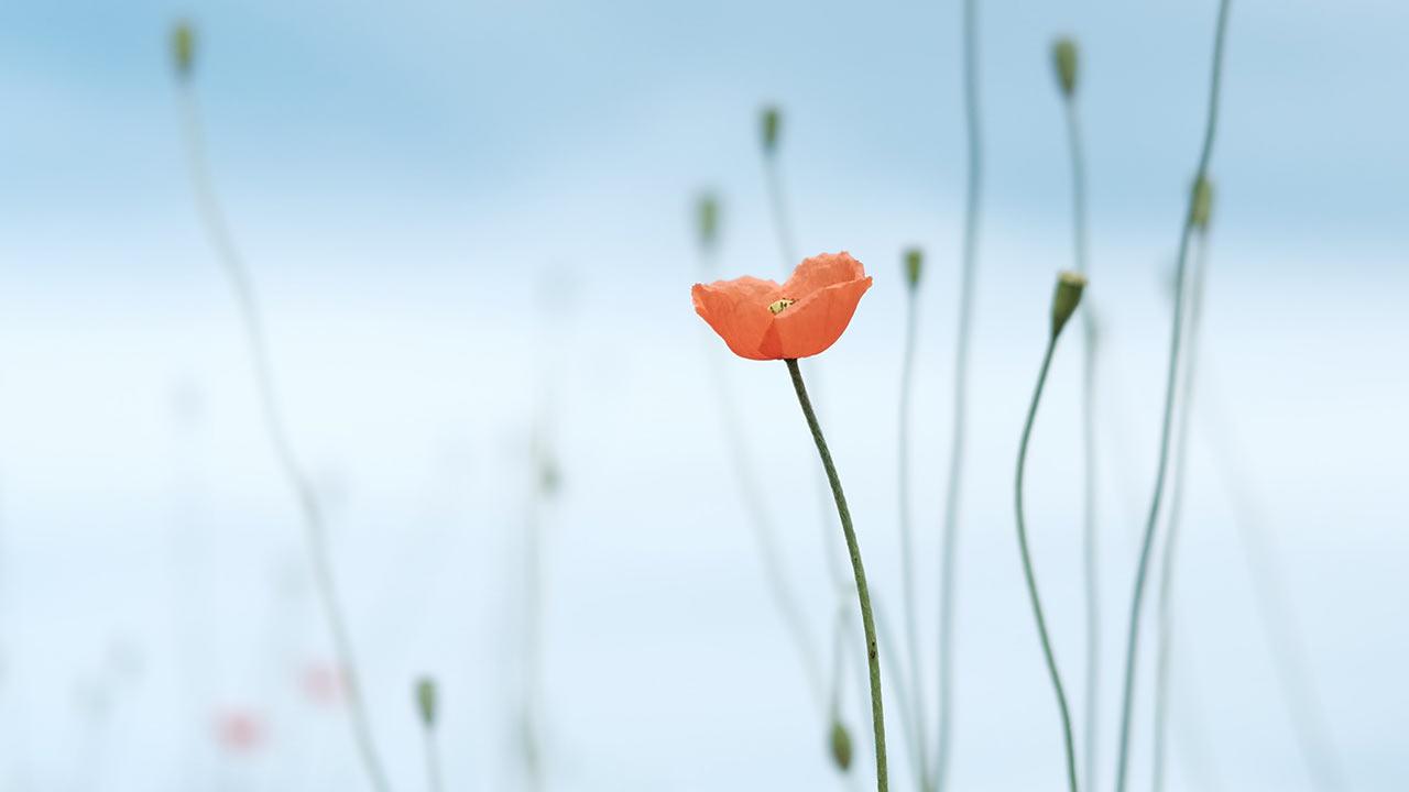 Hoffnung bleibt bestehen | (c) unsplash