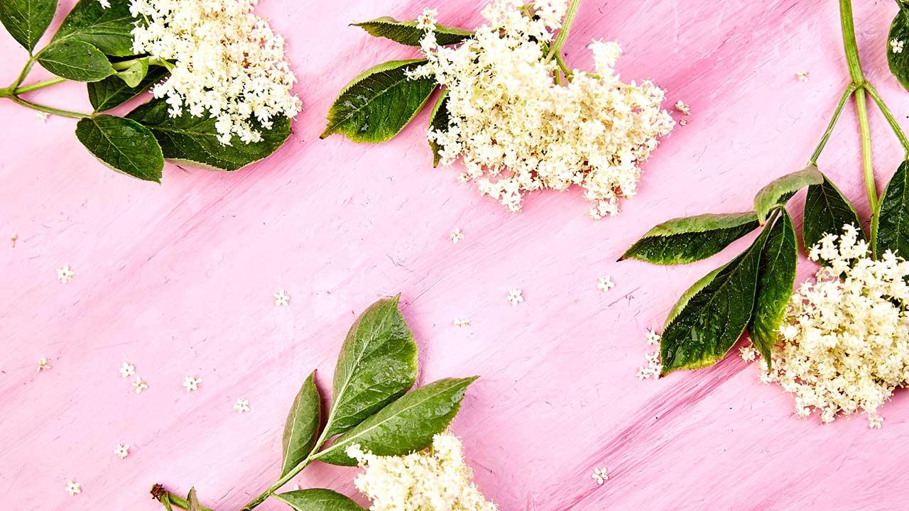 Holunderblüten auf einem pink Tisch