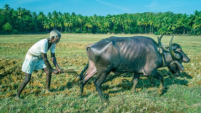 Bauer in Goa, Indien