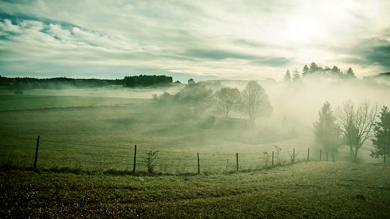 Nebel über einer Wiese