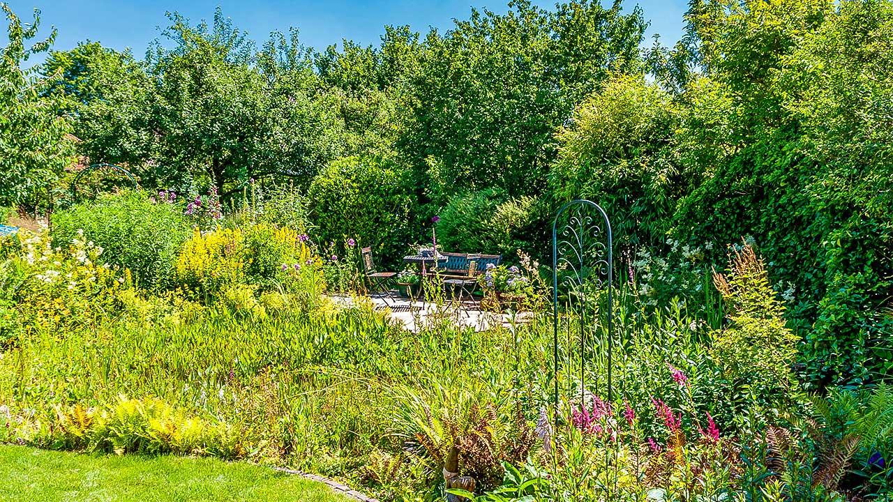 Naturgarten im Sommer