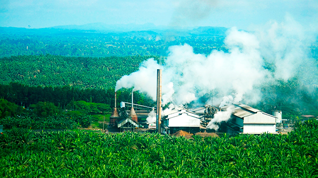 Palmölmühle in Ölpalmenplantage
