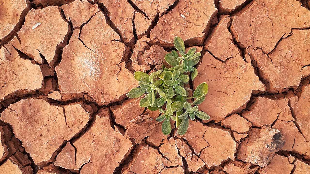 Pflanze wächst auf trockenem Boden | (c) unsplash