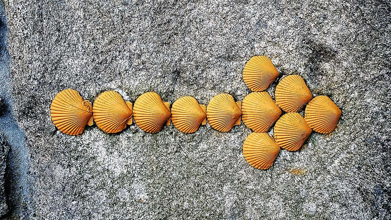 Pfeil aus Jakobsmuscheln auf einem Felsen