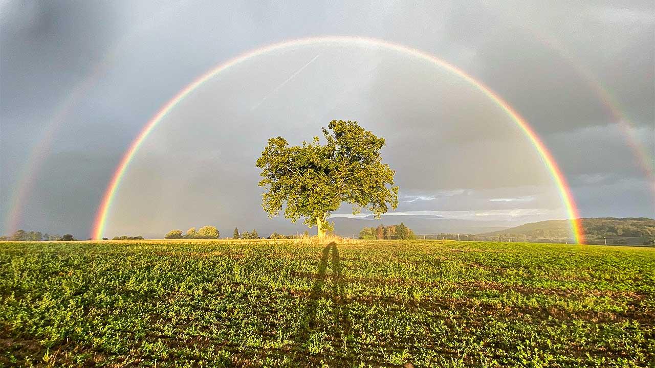Regenbogen über einem Baum, der auf einem Feld steht