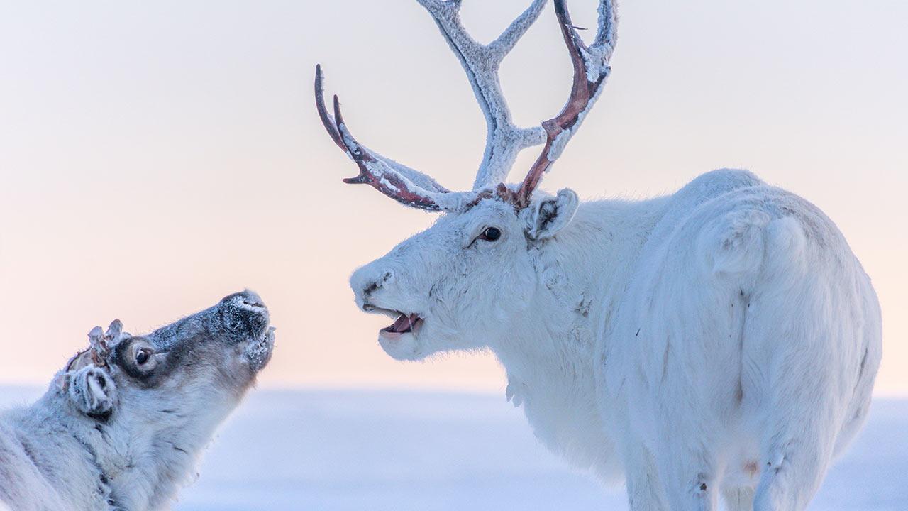 Das kleine Geschenk träumt gross - eine Weihnachtsgeschichte