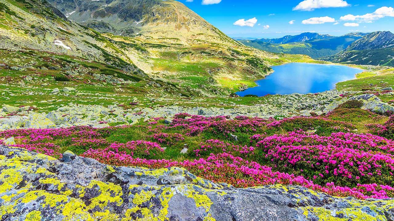 Retezat-Nationalpark in den rumänischen Karpaten mit Blumen und Bergsee