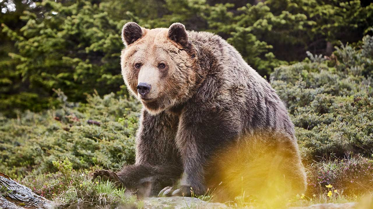 Bär Meimo im Bärenland Arosa