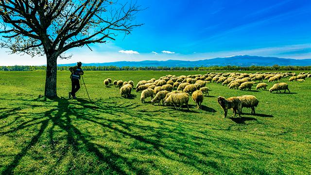 Schäfer und Schafe: Gott und Menschen