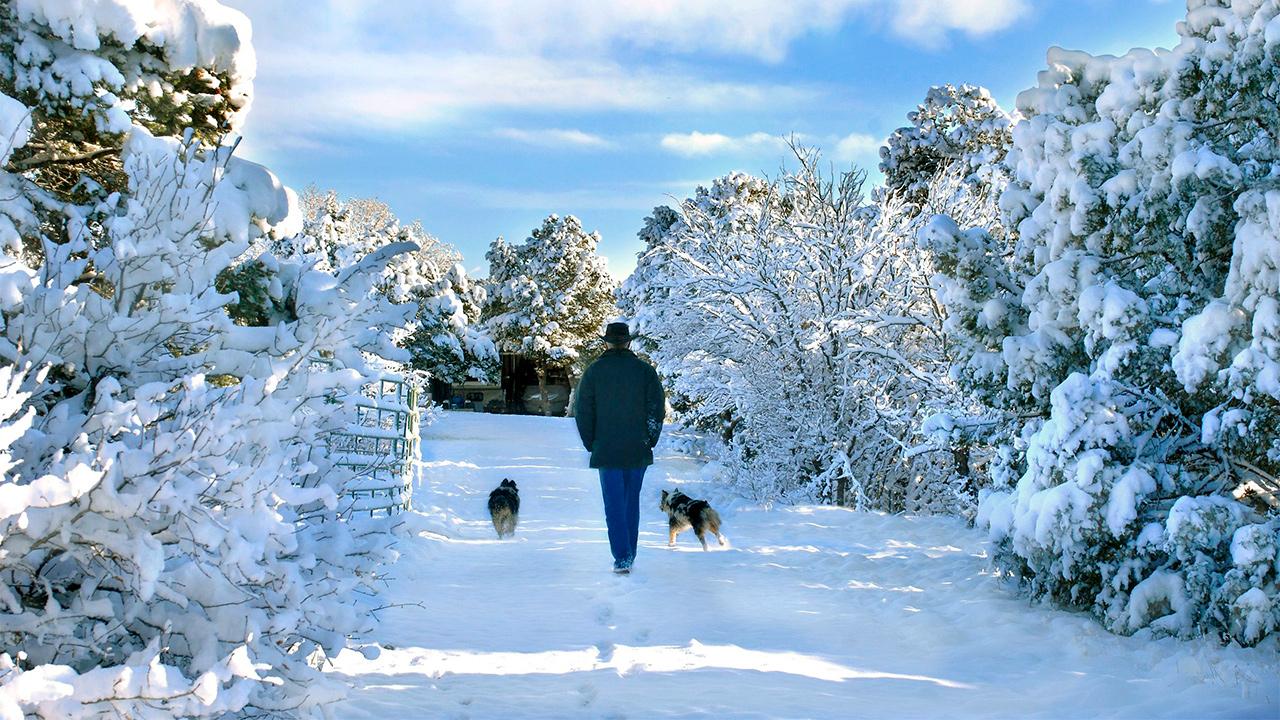In der winterlichen Stille