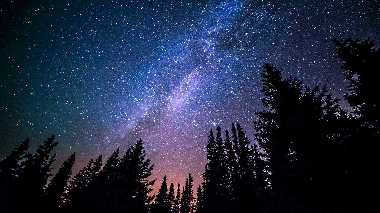 Sternenhimmel über Silhouette von Bäumen
