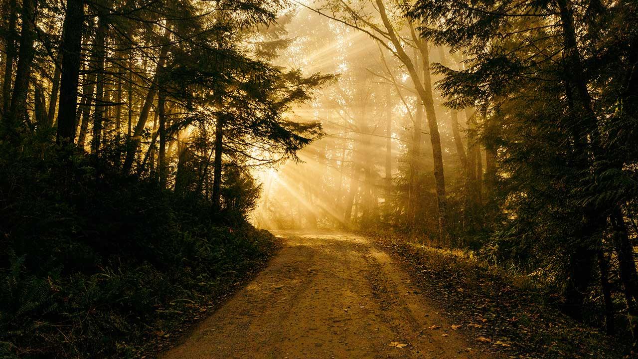 Waldweg durch den Chuckanut Mountain in den USA