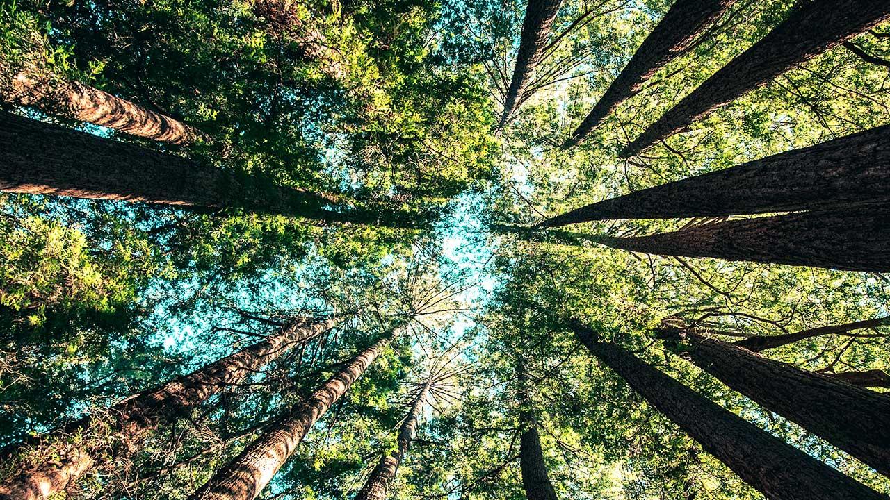 Blick in die Bäume hoch