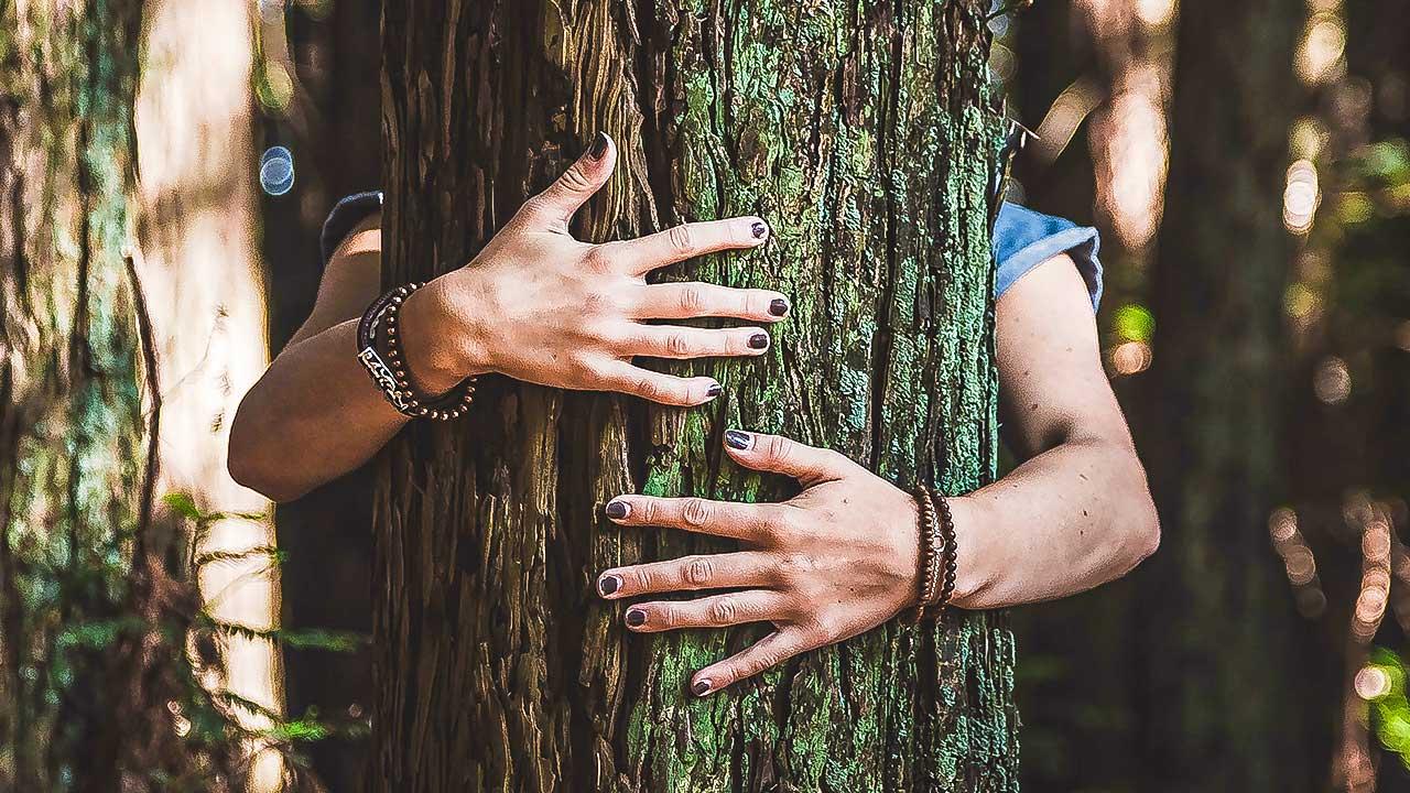 Frauenhände umarmen einen Baum