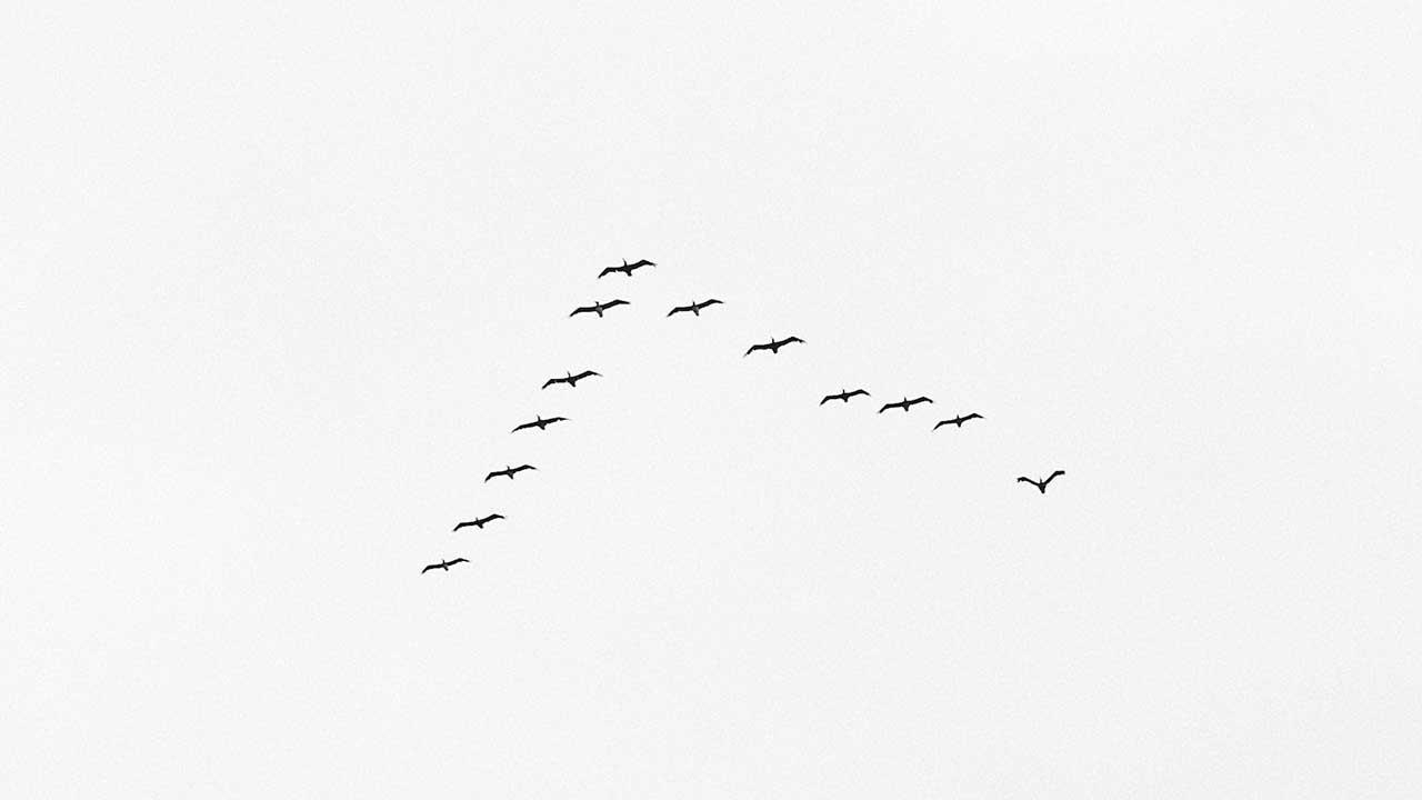 Zugvögel-Formation