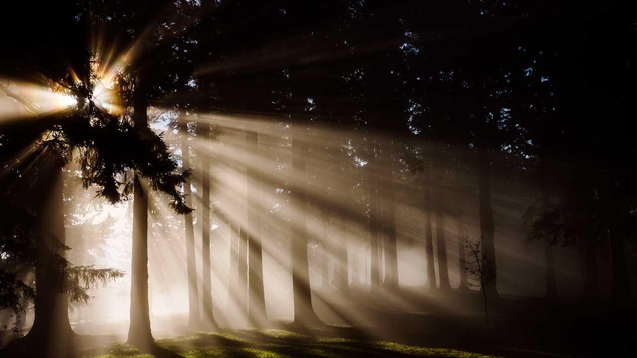 Sonnenlicht scheint durch die Bäume eines Waldes