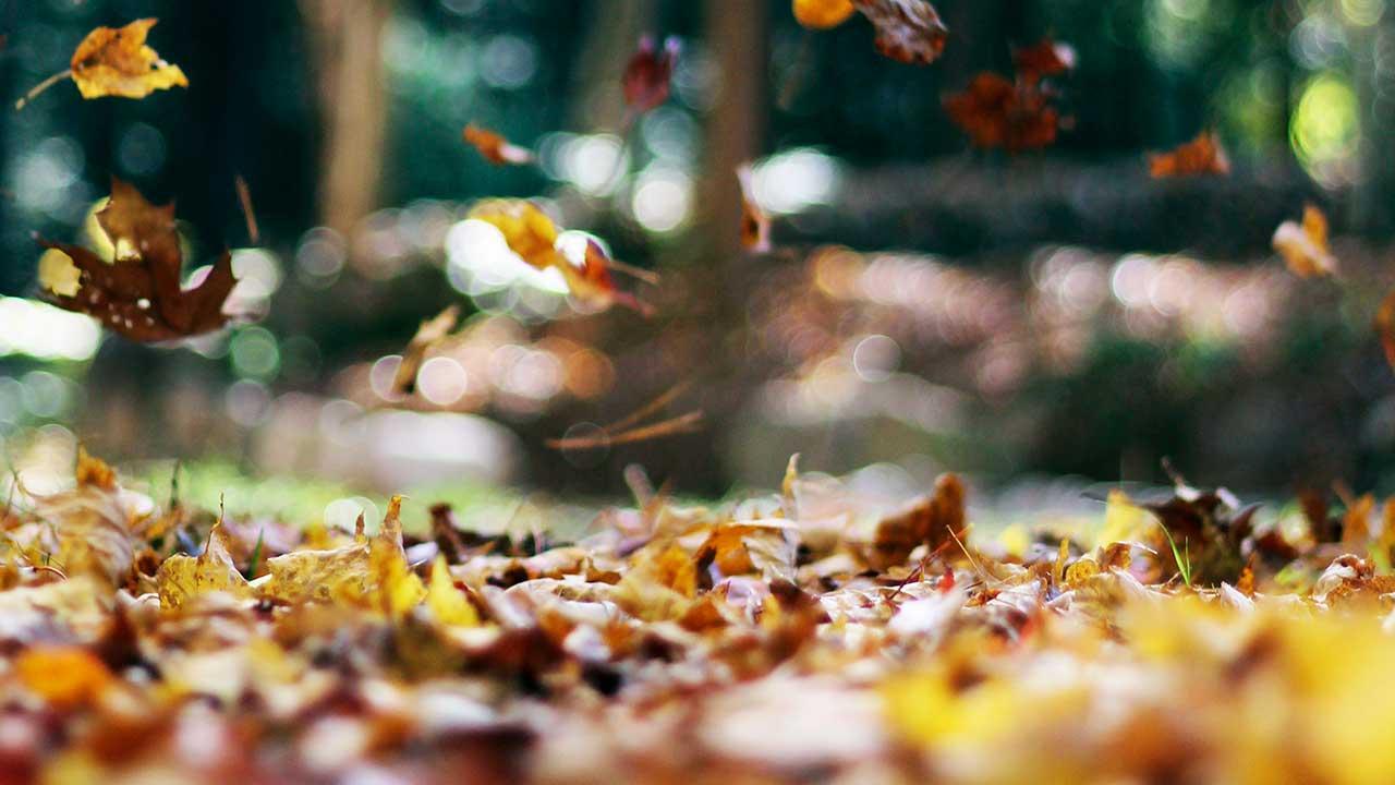 Fallende Blätter im Herbst | (c) Autumn Mott Rodeheaver/Unsplash