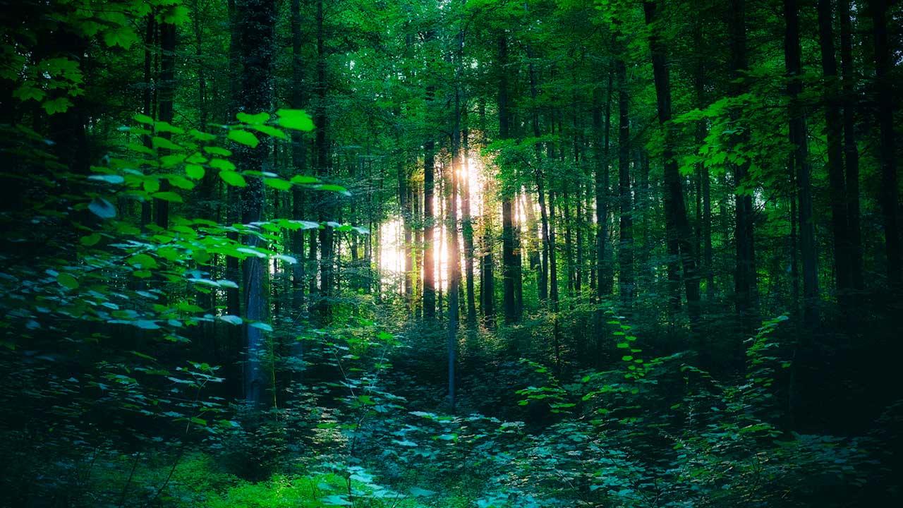 Wald, in dem in der Ferne Sonnenlicht zu sehen ist
