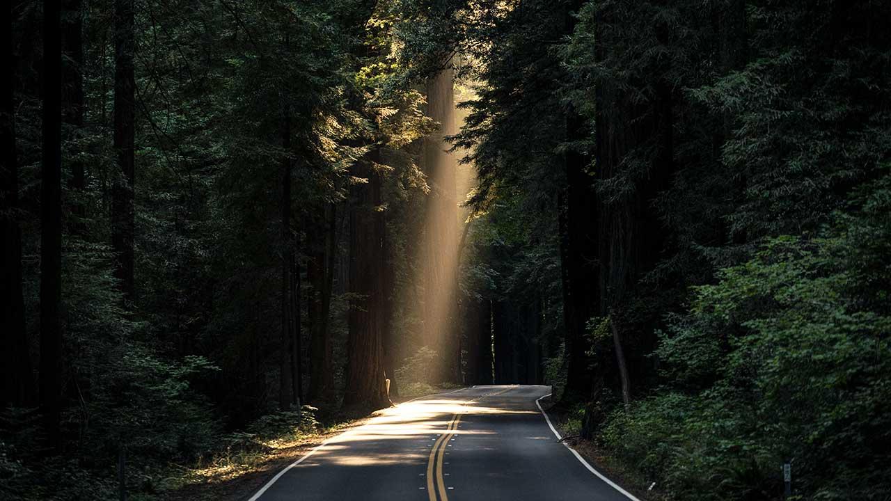 Sonnenlicht scheint durch Bäume auf eine Strasse – als Symbol für Hoffnung