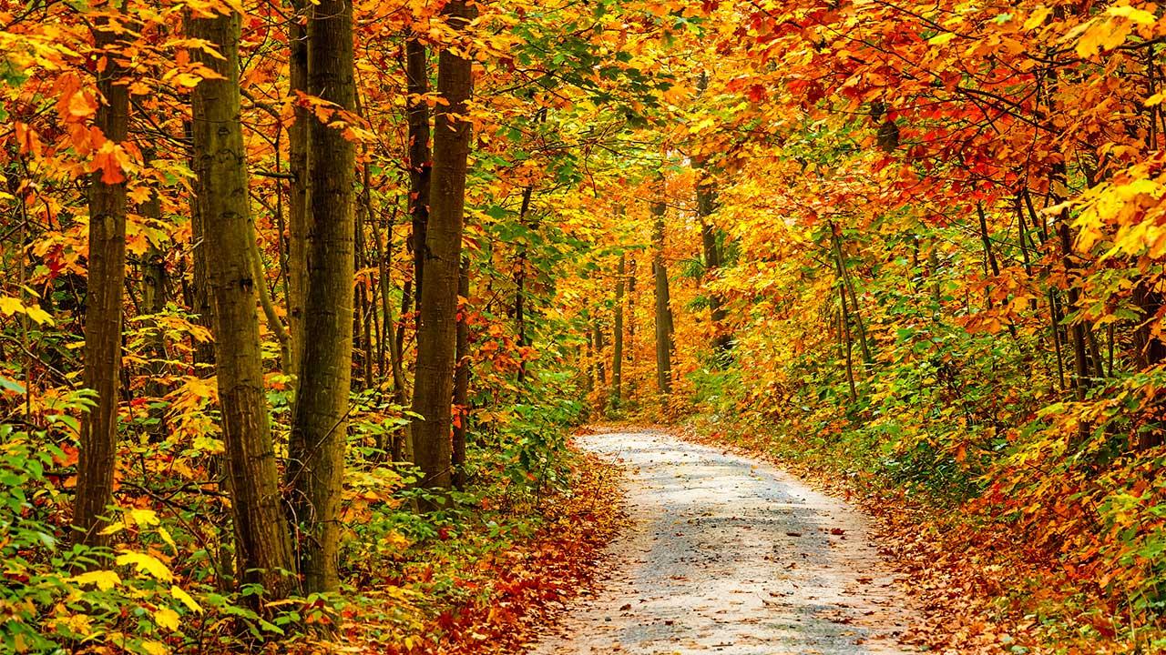 herbstlicher Wald mit verschiedenfarbigen Blätter